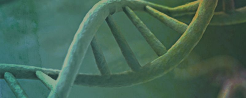 Stopping the Cycle:Preventing Familial Cancer With Preimplantation Genetic Diagnosis